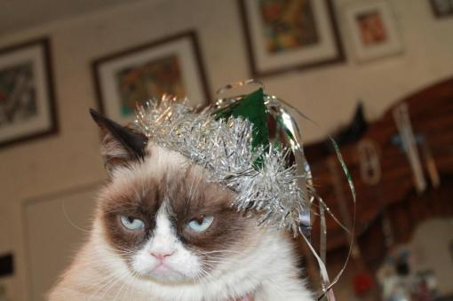 Conduit, Grumpy cat, Happy new year