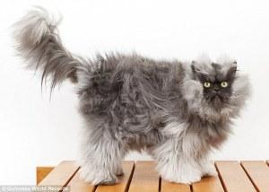 Scariest Cat Online