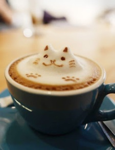kitty in coffe