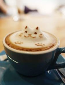 kitty in coffe